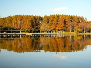 Reflet de la nature - © peerayot / Fotolia