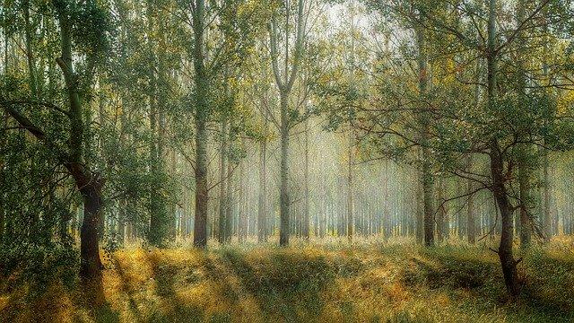 Forêt sous les rayons du soleil