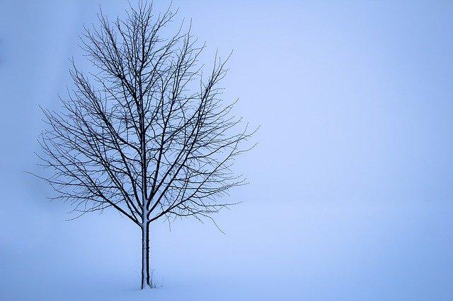 arbre pendant la saison d'hiver
